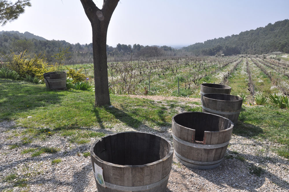 Clos de Caveau barrels