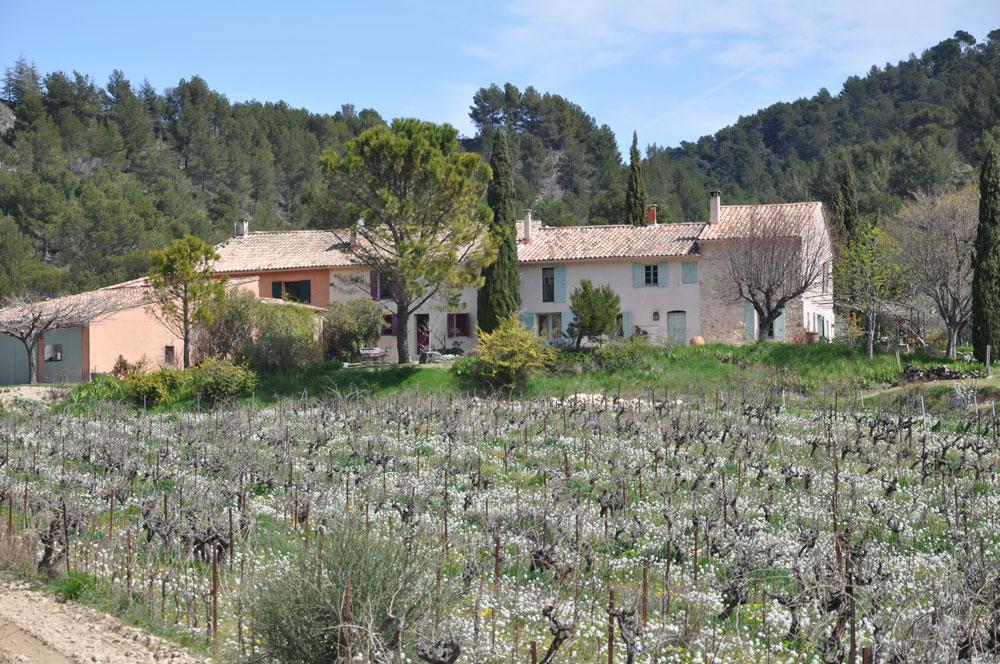 Clos de Caveau view of the vineyard
