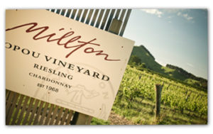 Millton Opou Riesling Chardonnay vineyards