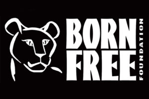 Born Free Competition