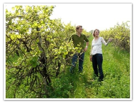 Graupert-Vines