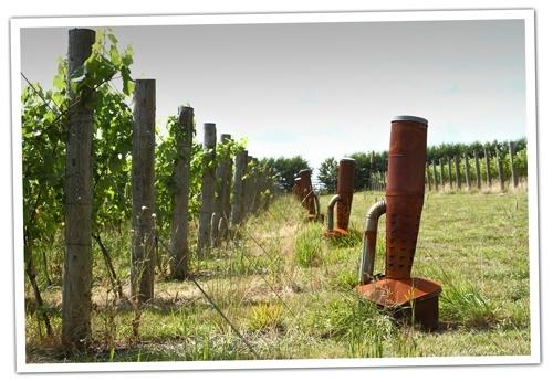 Burners-at-Albury-Vineyards