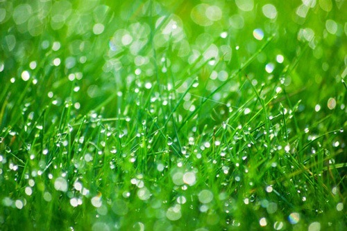 pic-of-glistening-grass