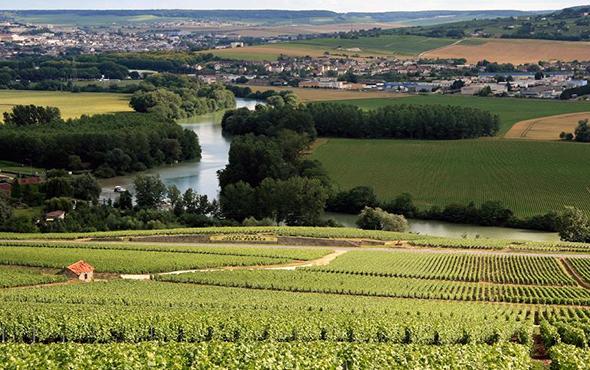 Champagne french wine region