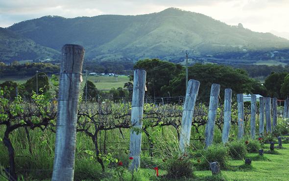 queensland australian wine region
