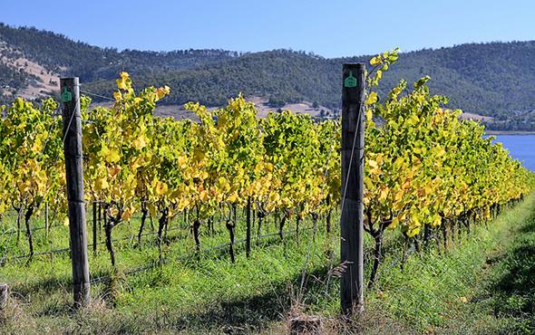 tasmania australian wine regions