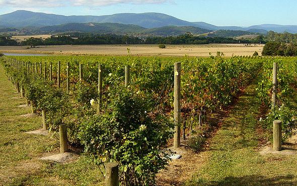 australian wine regions victoria