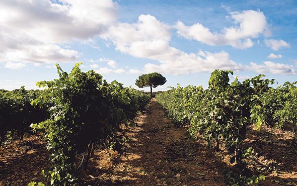 mineral stone finish. Ribera del Duero Wine Region
