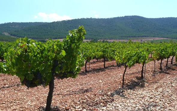 Valencia Wine Region