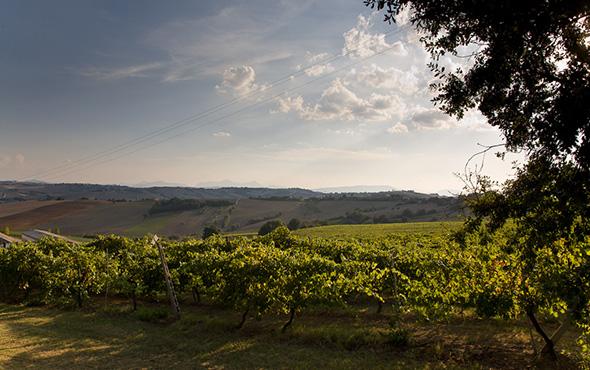 Marche and Abruzzo wine regions in Italy