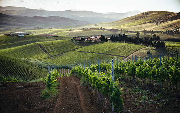 Sicily wine region Italy