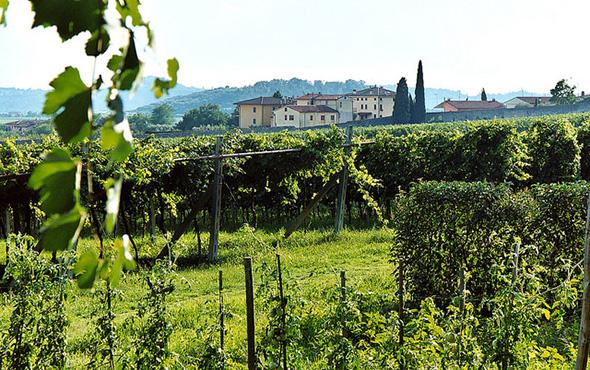 Veneto wine region Italy