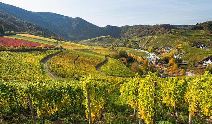 German Riesling wine region Ahr