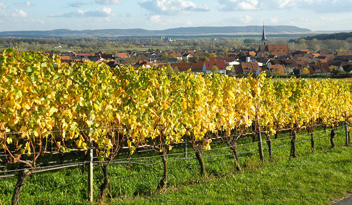 German Riesling wine region Franken