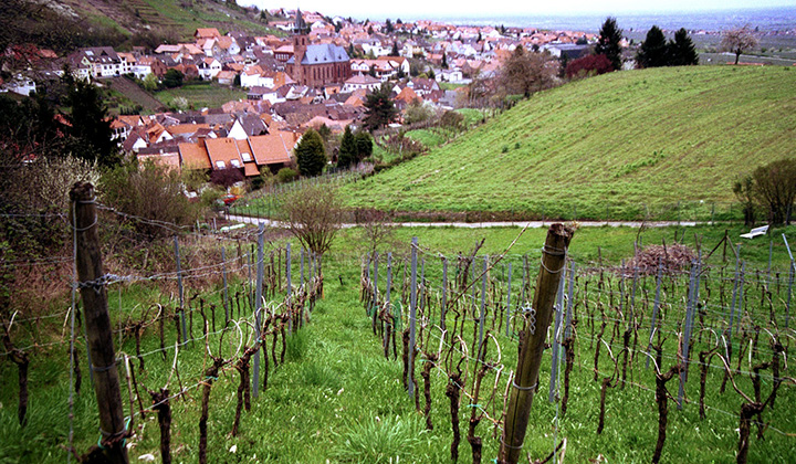 German Riesling wine region  Pfalz