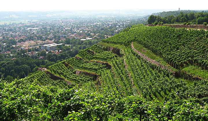 German Riesling wine region Sachsen
