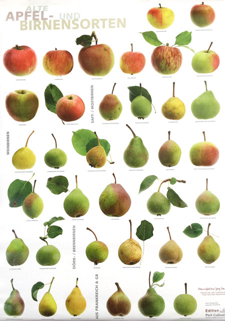 Apple and pear varieties