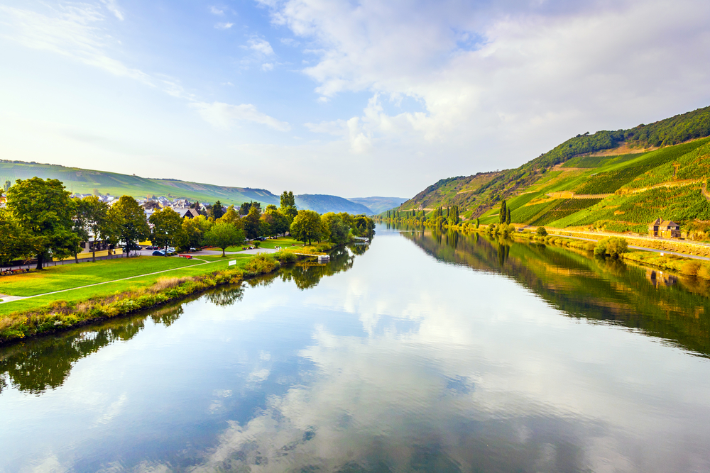 vineyards at the hills of the romantic river Moselle edge in summer with fresh grapes and reflection in the river