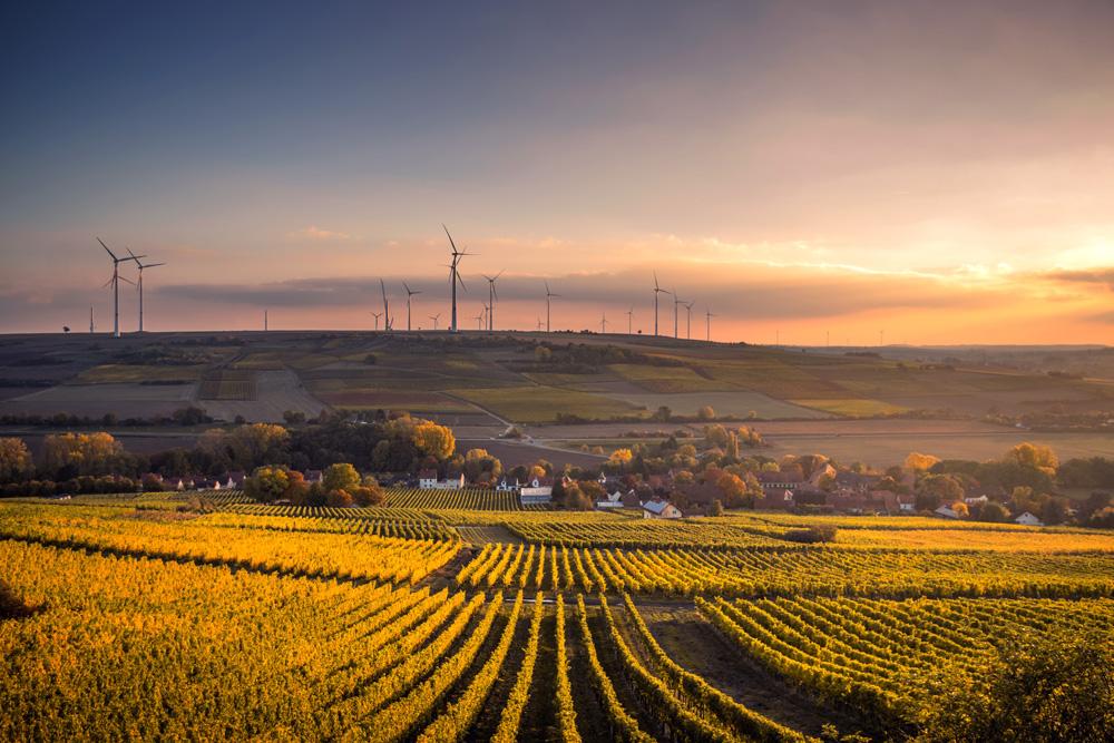 Vines and wind turbines