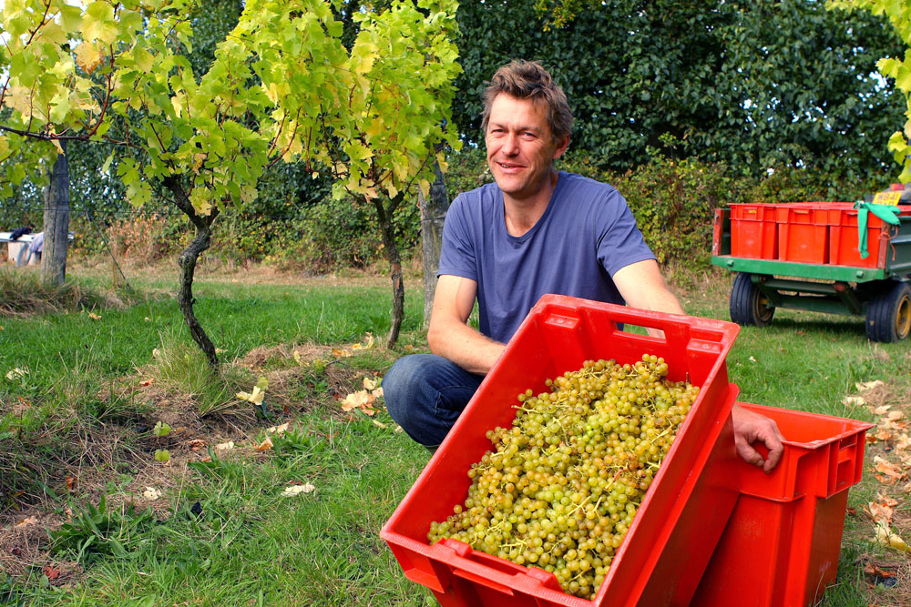 Man with box of grapes in vineyard