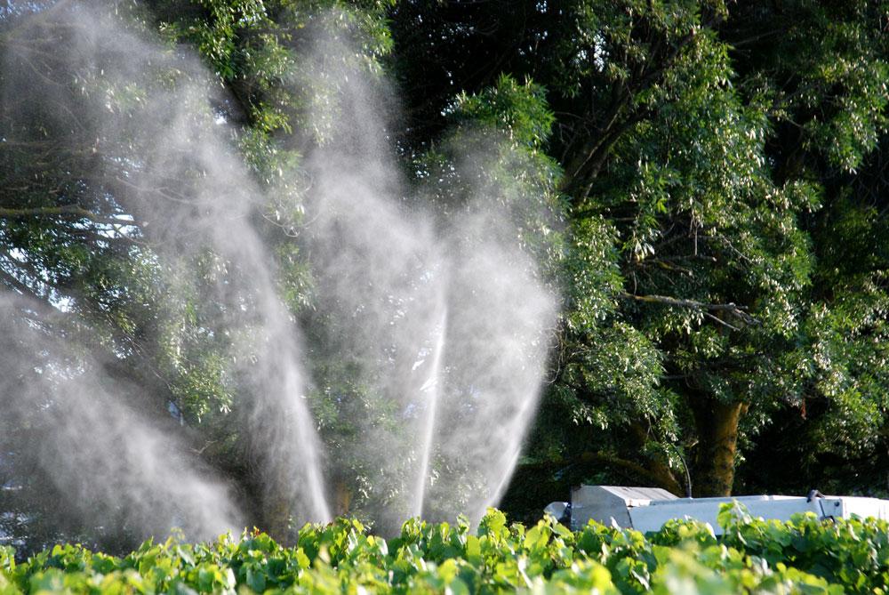 Biodynamic spraying in vineyard