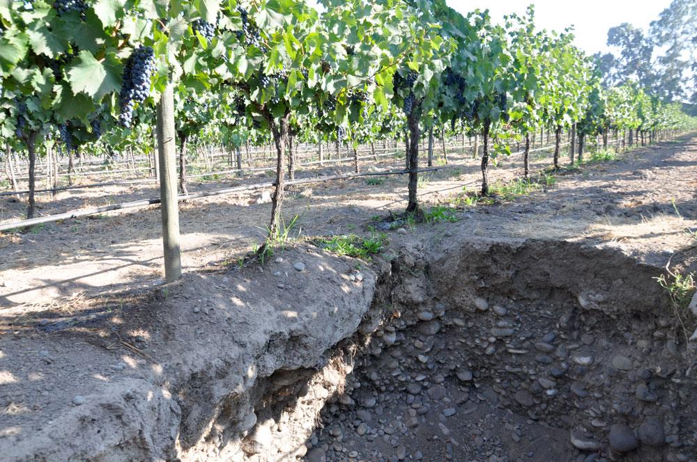 Stones in organic vineyard