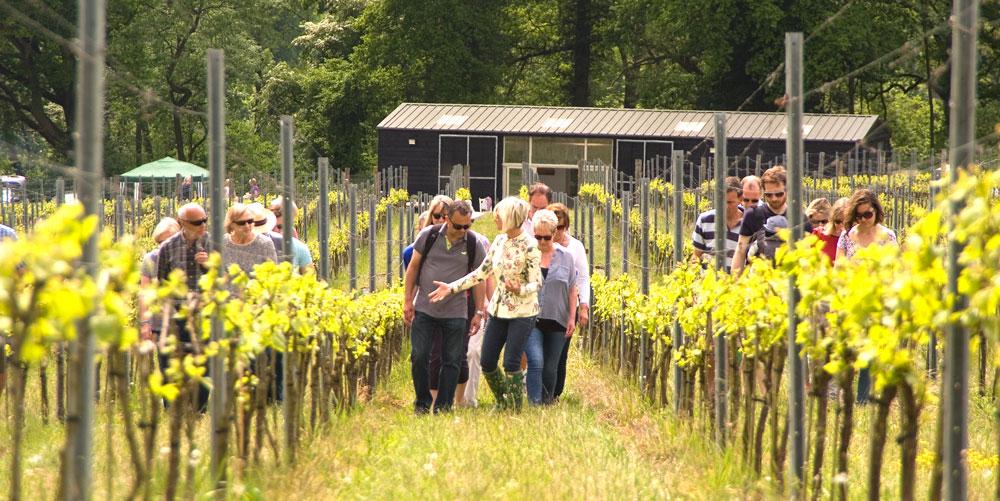 People walking through organic vineyard
